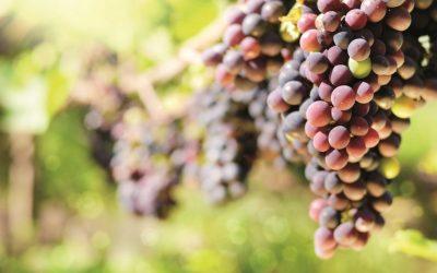 Un voyage olfactif et dégustatif des différentes régions viticoles