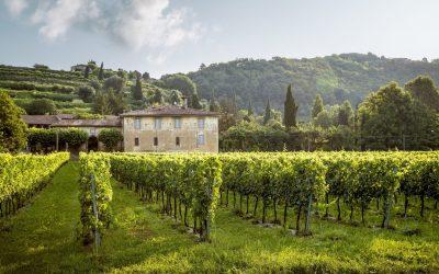 Les grands domaines viticoles et ce qui fait leur réputation